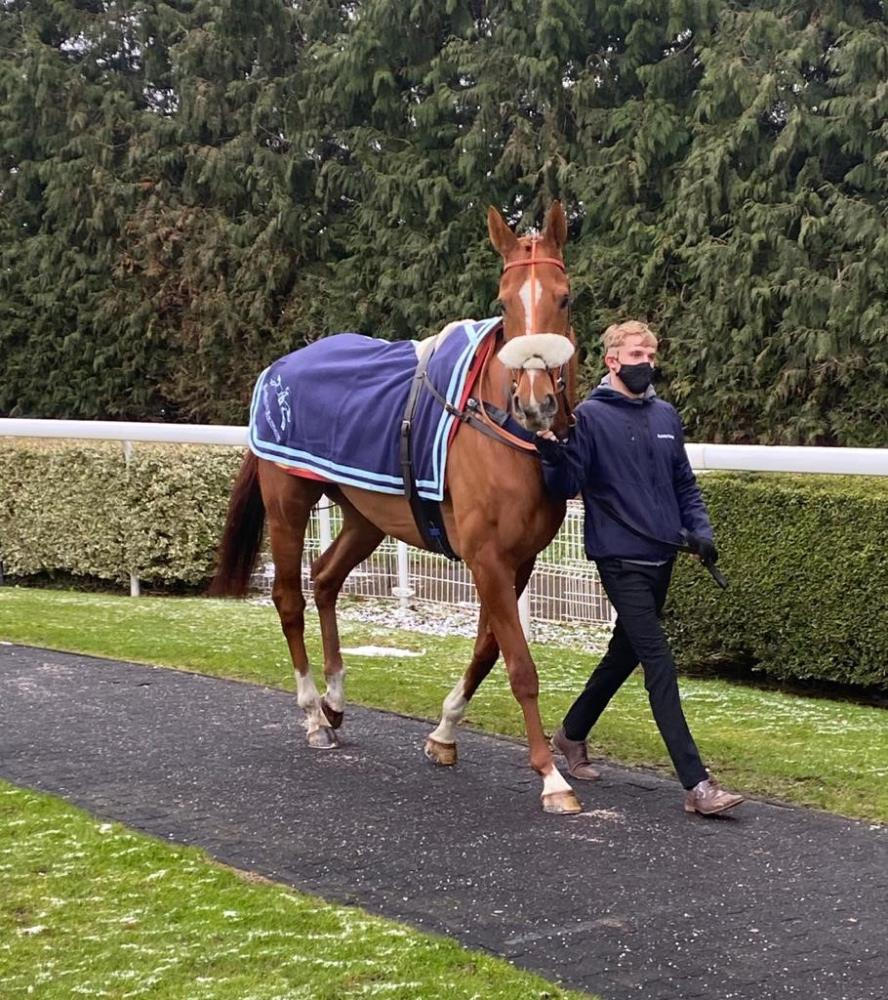 Prince Llwelyn yesterday at Kempton