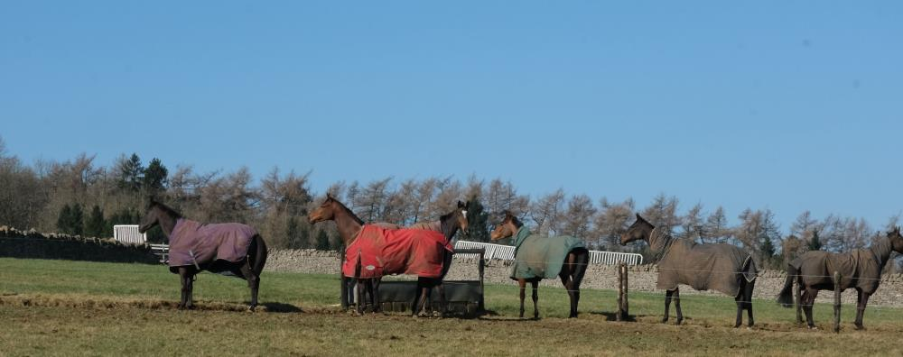 Happygolucky, Ajero, Espoir De Romay, Imperial Aura, First Flow and Vinndication