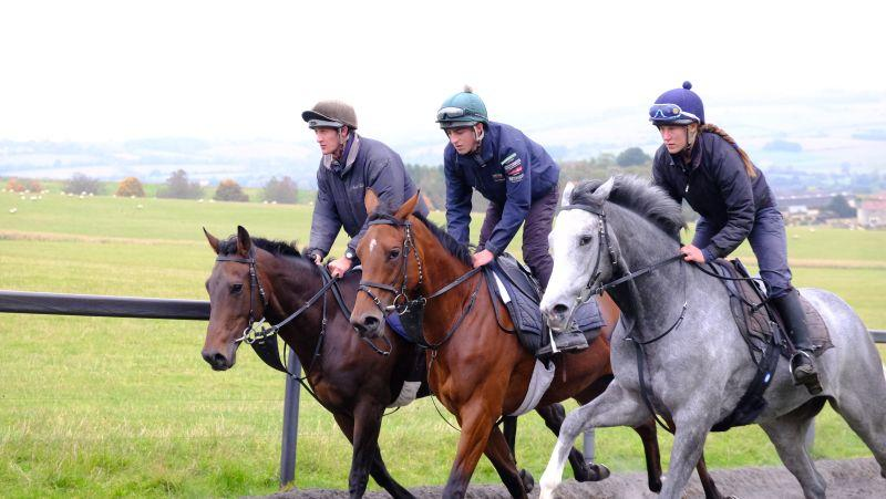 The Flemensfirth gelding, Our Belle Amie and The Kayf Tara gelding cantering upsides