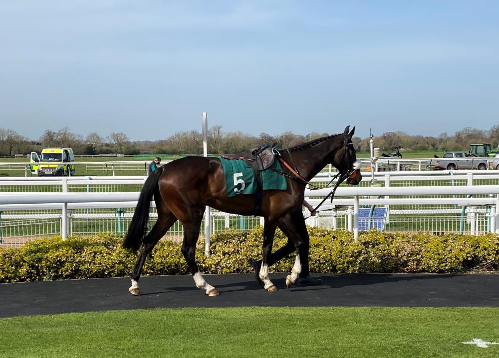 Java Point in the paddock before his race at Warwick yesterday