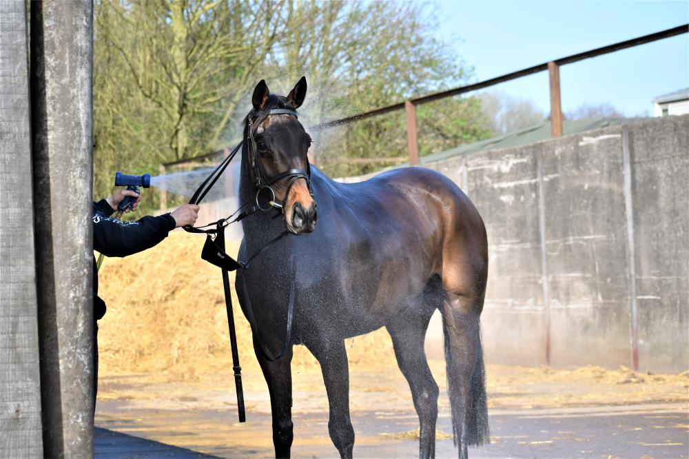 The Getaway 4 year old gelding