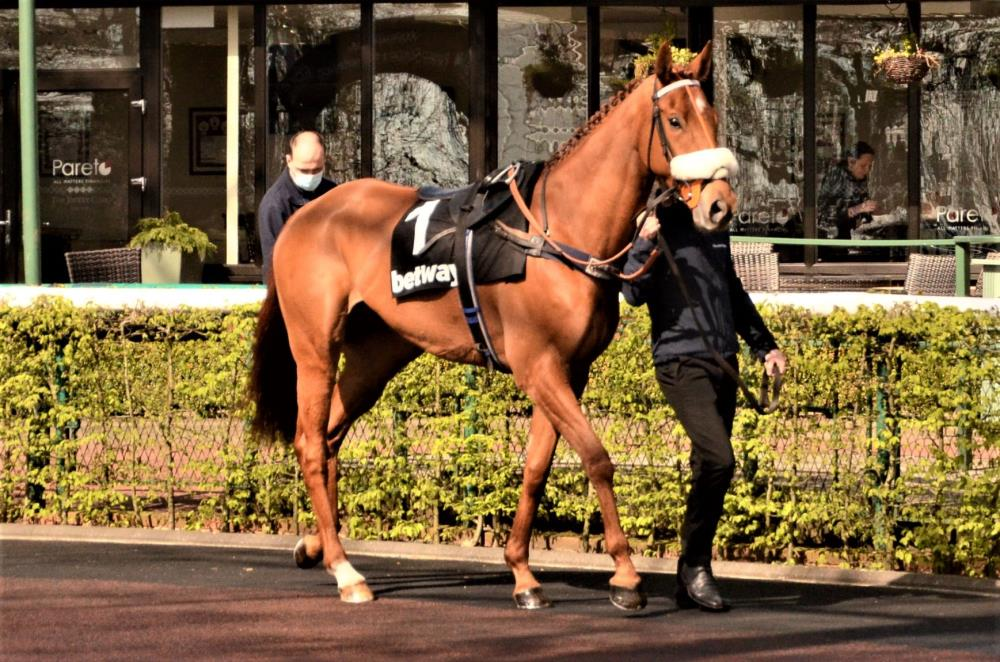 Shantou Express in the paddock before his race.. Thanks John Full for the photo