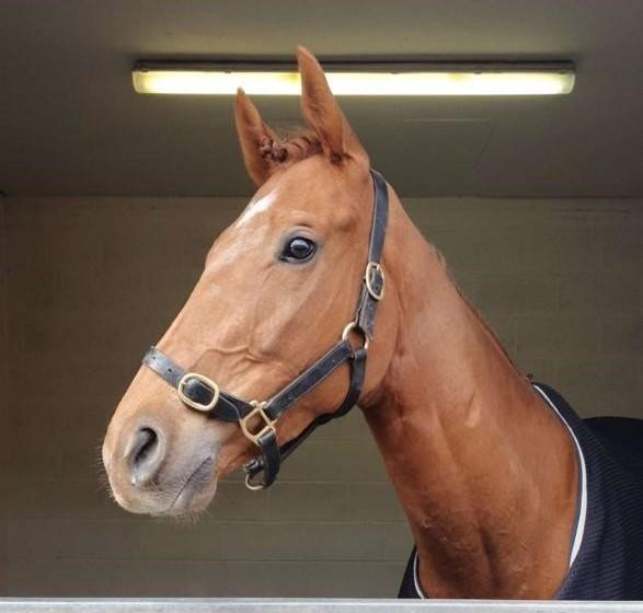 Shantou Express before his race