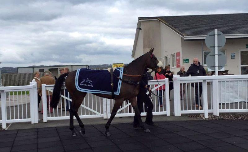 Kilty Caul in the paddock at Ffos Las on saturday.. before she was second.