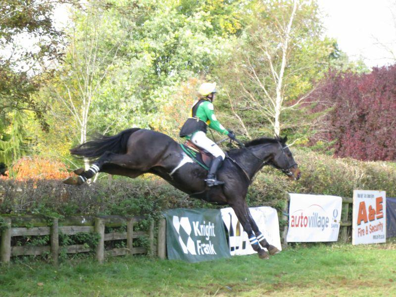Panda again on another ex racehorse Offshore Account