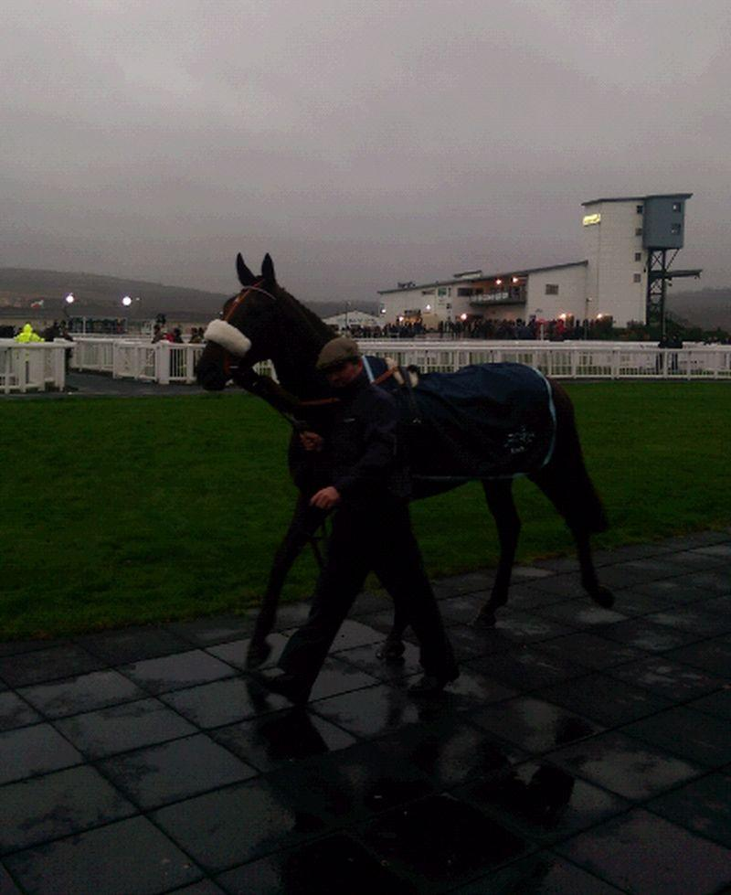 Wet and wild at Ffos Las.. Molly's A Diva in the paddock.. our new waterproof sheets were needed..