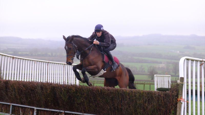 Allez Encore jumping fences this morning