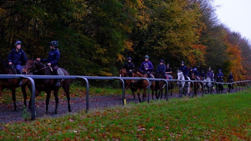 Walking down the gallops