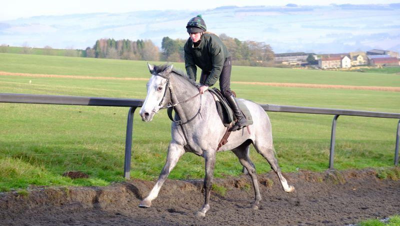 The grey Kayf Tara 3 year old gelding