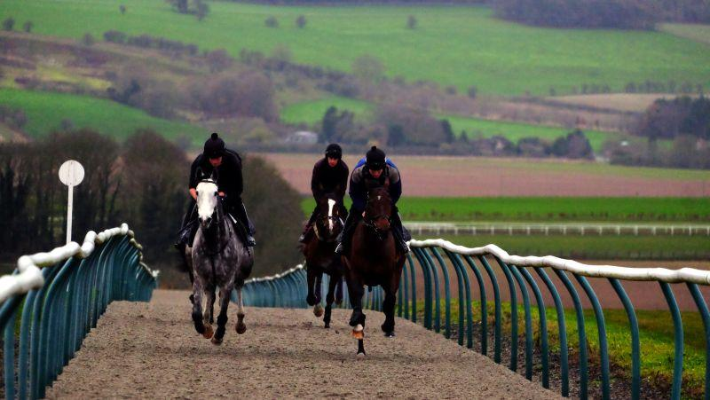 Cracked Rear View and Didntitellya leading the first canter