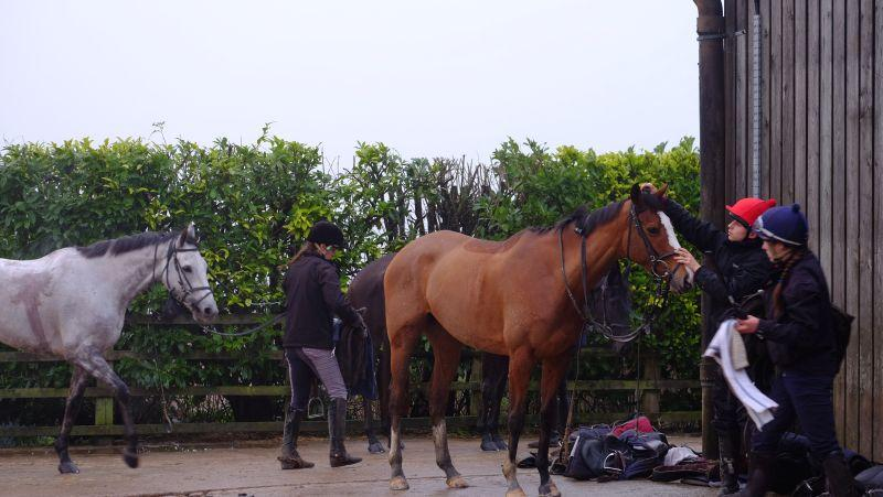 Tara's Rainbow being un tacked after exercise
