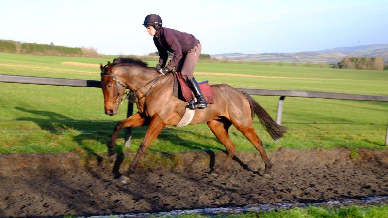 Paul and Clare Rooney's Shantou Gelding
