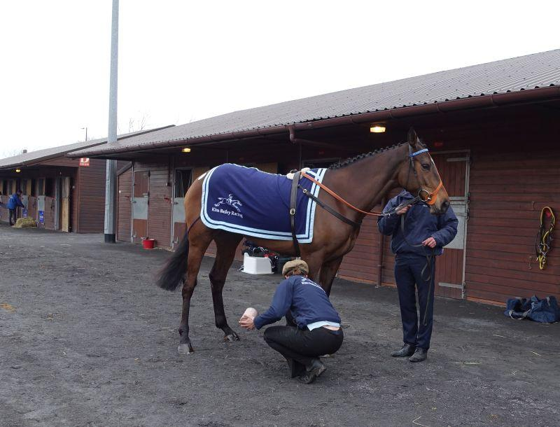 Allez Encore being tarted up for the sales ring