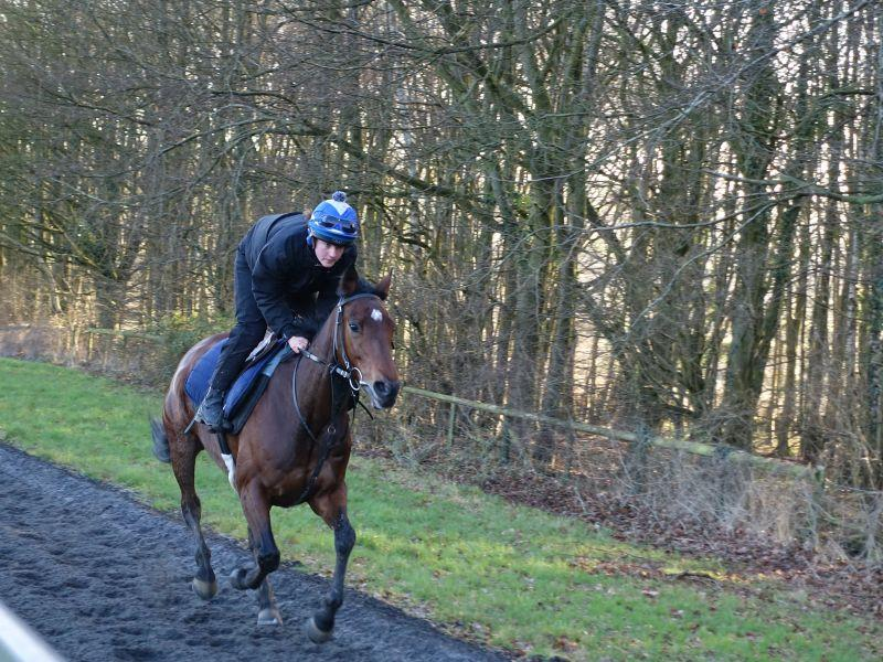 Magic Money cantering this morning