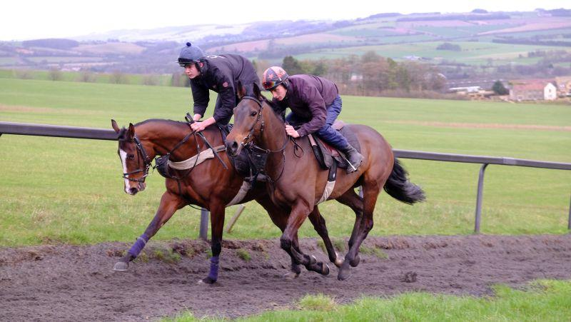 Laval Noir and The Flemensfirth gelding