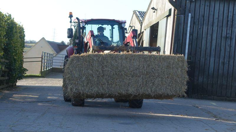 Moving the straw bedding around