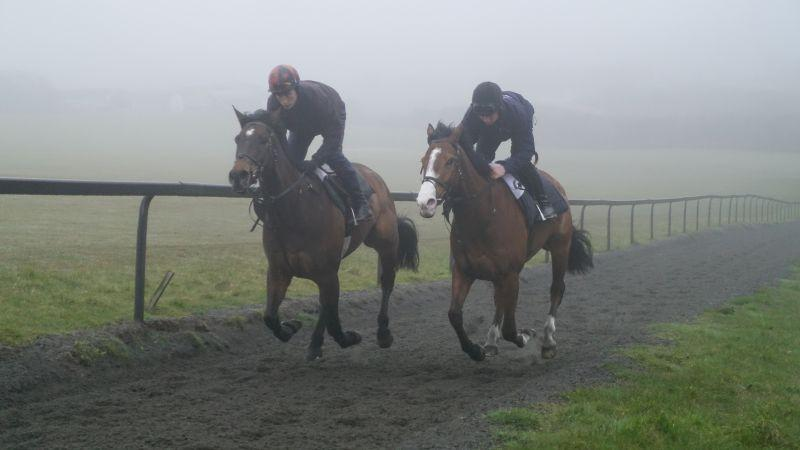 Mor Brook and Ballyknock Lad
