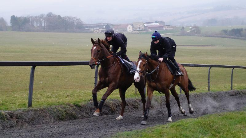 Sugar Loaf Sholto and Ballyknock Lad