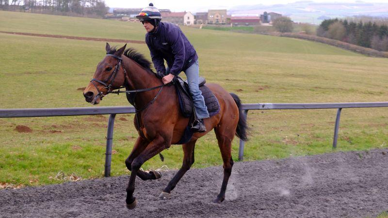 Darna cantering this morning .. great to see him back after his fall at Cheltenham last week