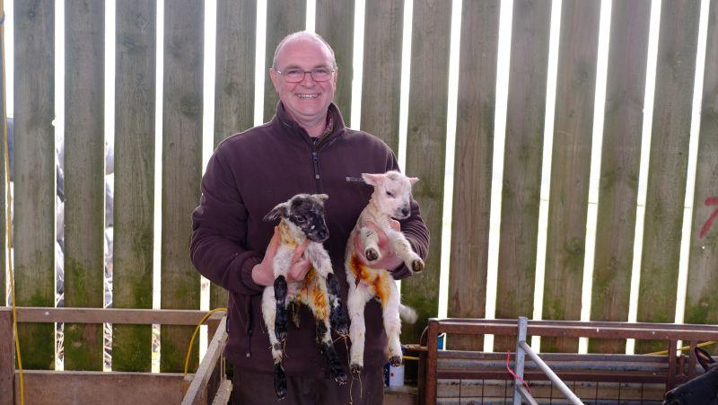 These were Gordon Fairburn's first set of lambs.. he is now nearly finished lambing..