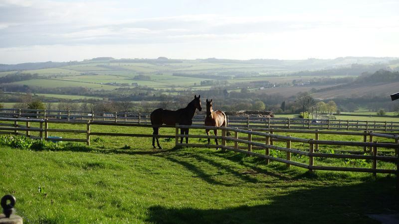 Sainte Ladylime and Shaluna out in the field
