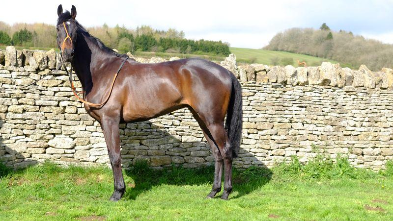 To finish.. Our new Kim Bailey Racing Partnership horse Chateau Robin..