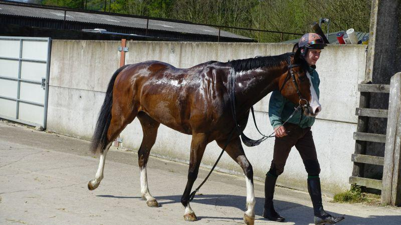 4 year old Tamure gelding having had a wash
