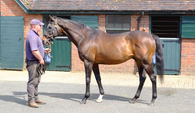 The most famous NH stallion in the UK.. Kayf Tara