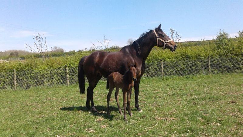 Mrs Peachey and her filly foal