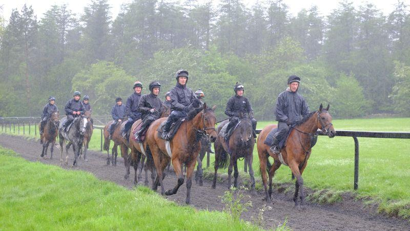 Walking back down the gallop after first lot in the rain