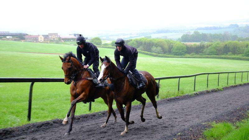 Watcombe Heights and The Tamure Gelding