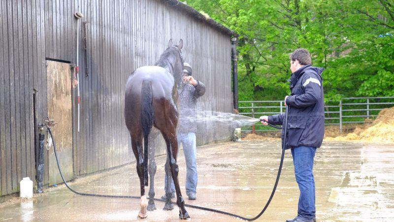 Milord having a wash