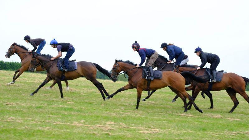 Ballyknock Lad leading Jimmy The Jetplane and Rhianna