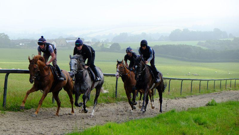 Patsys Castle and Sunblazer leading Net Work Rouge and Ballyknock Lad