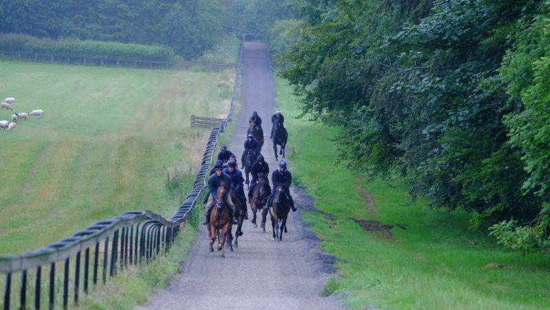 The Last Samuri leading those having their first canter