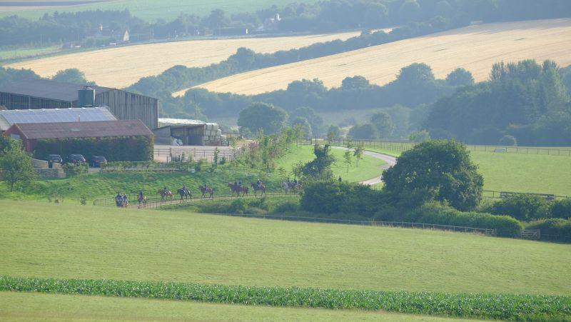 Horses heading down the drive towards the gallops first lot