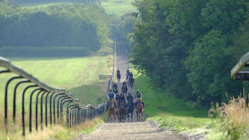 Coming up the gallops