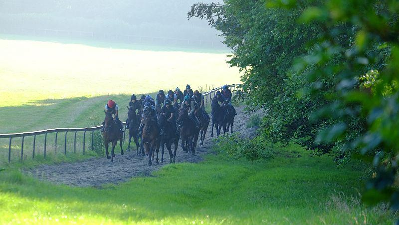 Fist lot cantering