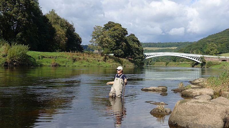 Clare fishing the Wye last night with Bigsweir Bridge in the background..