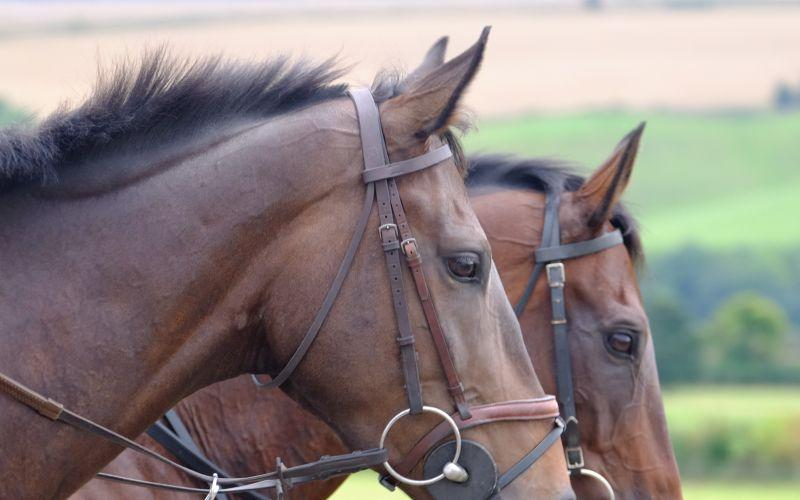 Minella Warrior and Harry Topper.. Two stunning heads