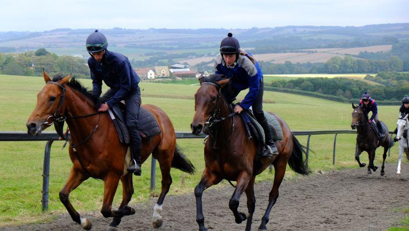 The Midnight Legend Gelding and The Passing Glance Filly cantering upsides for the first time