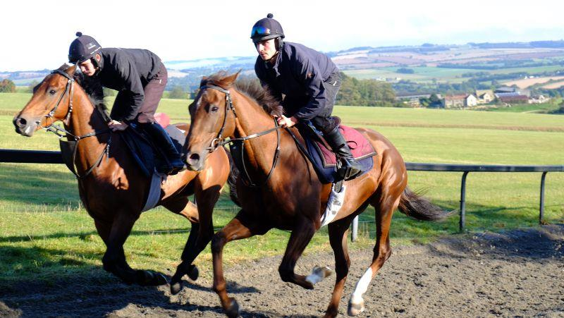 Champion Chase and Biscuit cantering upsides