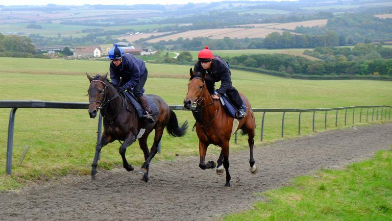 Michael Worcester's horses Coco des Champs and Shaluna