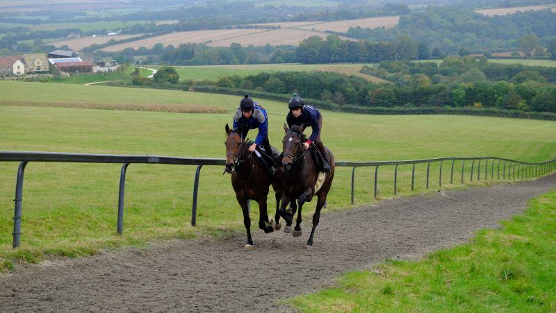 Derrintogher Bliss and Minella Warrior
