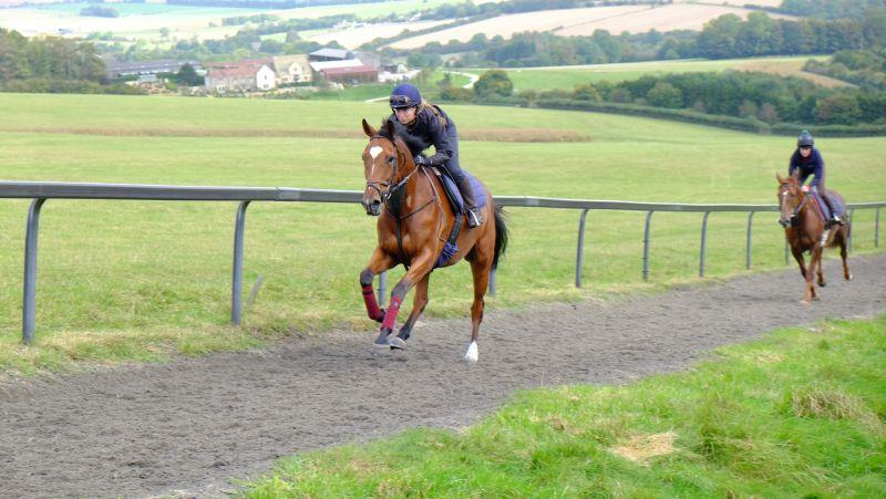 The 4 year old gelding by Beneficial who is a half brother to Royal Supremo