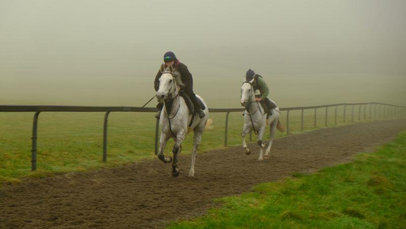 Knockanrawley and Billy Elliott two greys on the gallops this morning