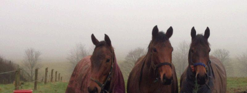 Aunty Ann, The Shirocco filly and JupitersGift out in the field yesterday