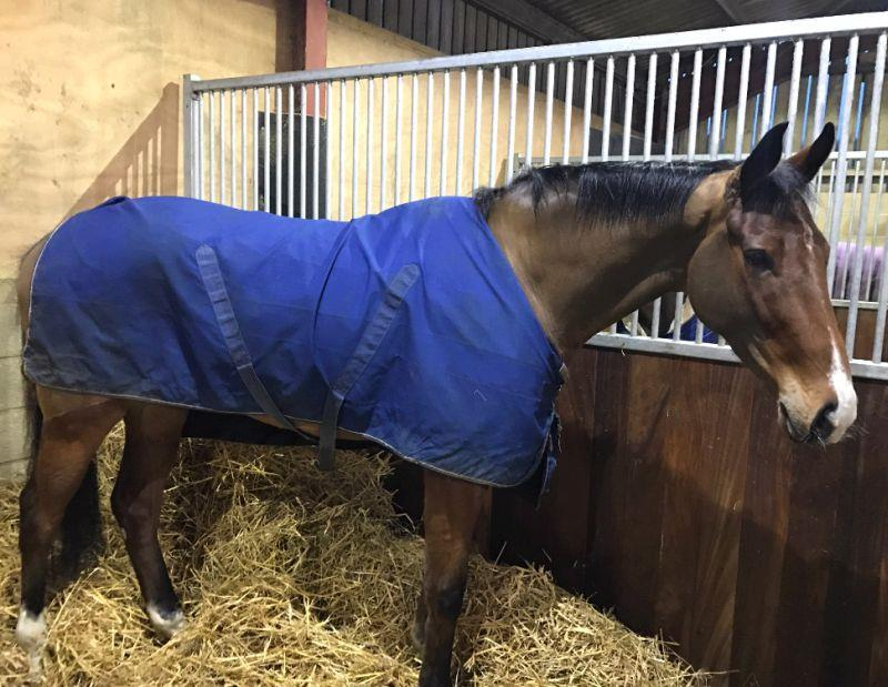 The May We Never Found Out Partnerships new horse Two For Gold in his stable last night.. He arrived yesterday
