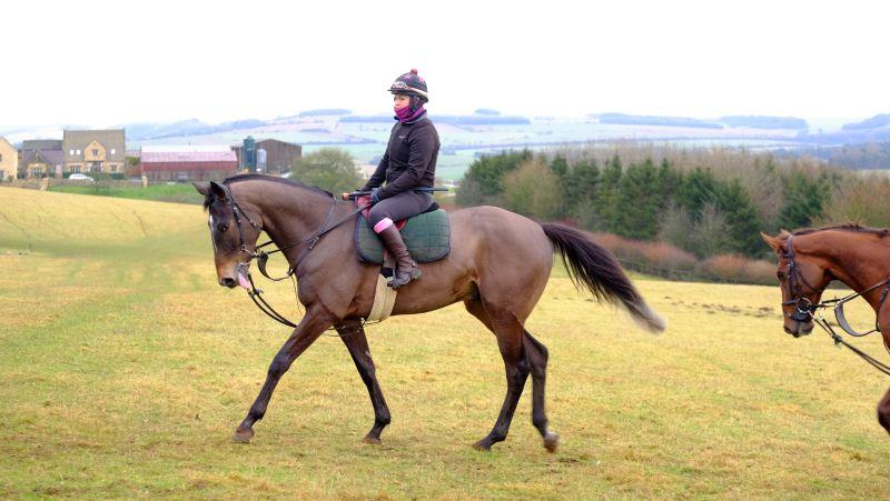 The Vinnie Roe gelding after working...For Sale